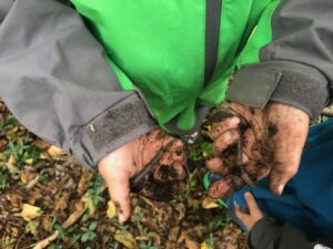 worms at forest school