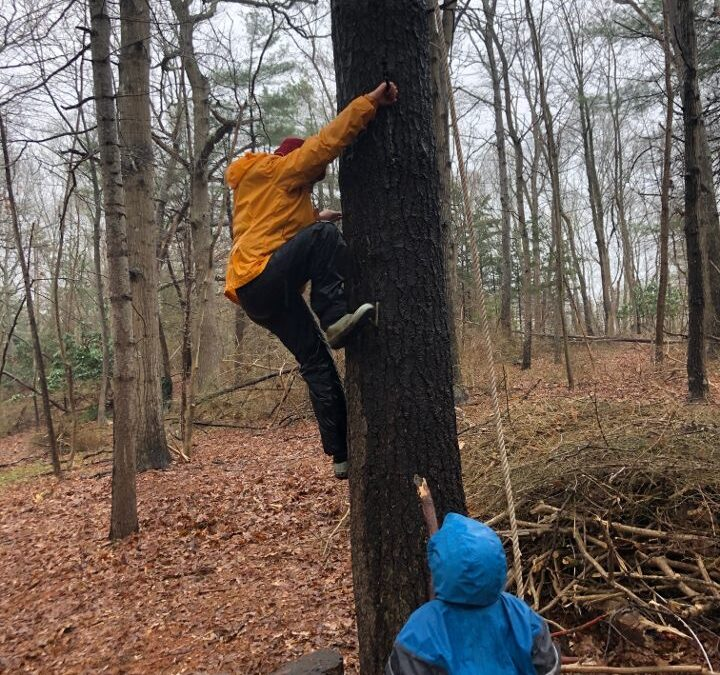 tree climbing, aishling forest school, risky play